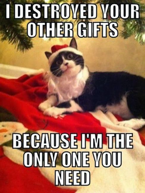 Image result for monday christmas cat images