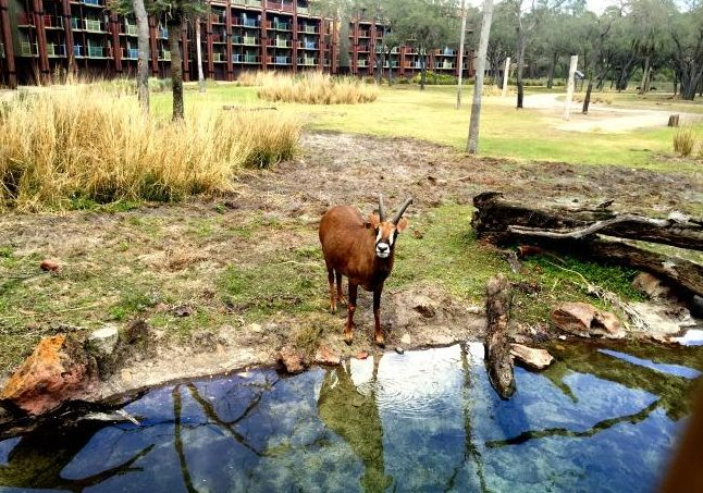 Animal Kingdom Lodge is eligible for disney free dining