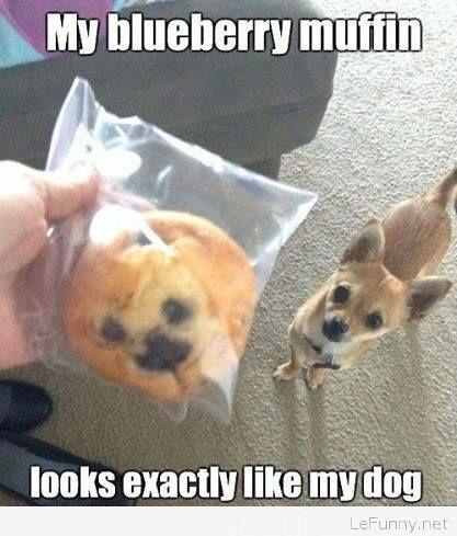 Funny-blueberry-muffin