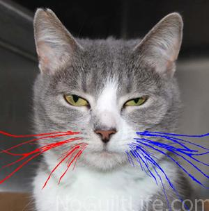 cat 4th of july