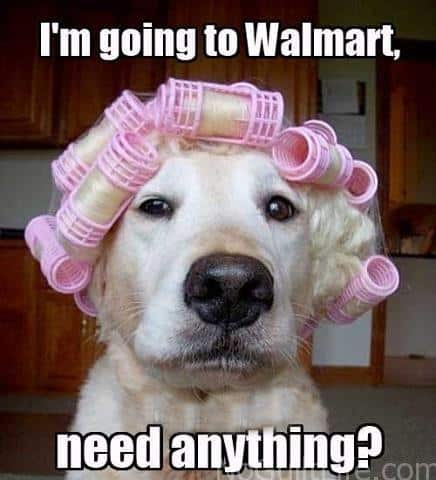 dog curlers