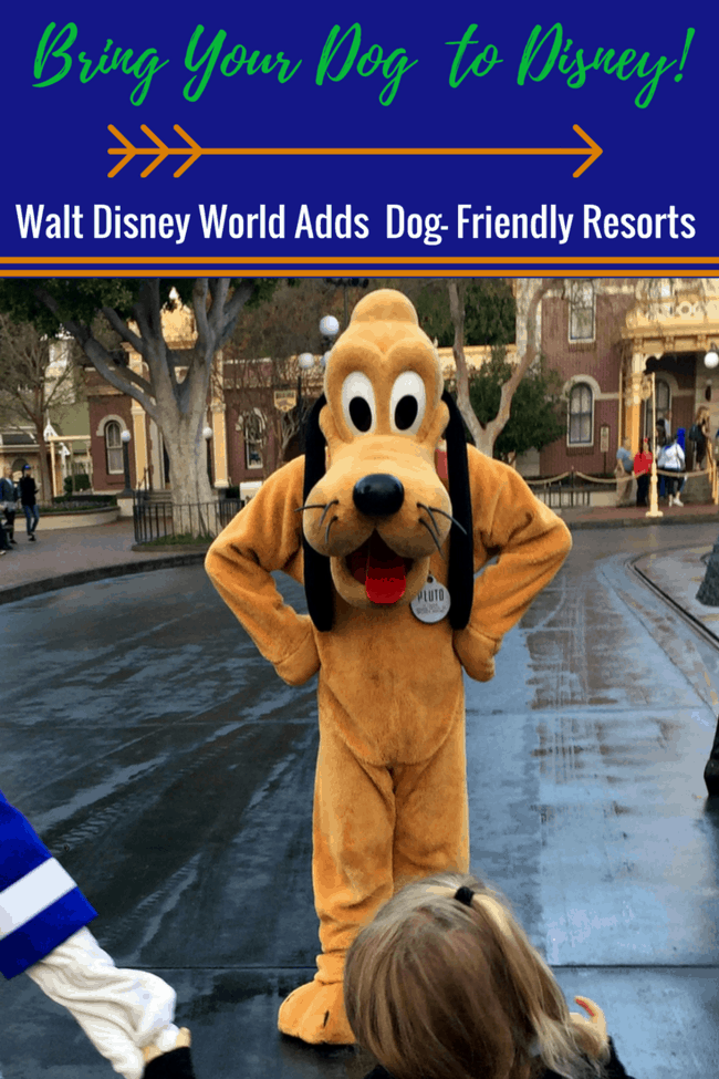 Disney World Allows Dogs at Four Resorts