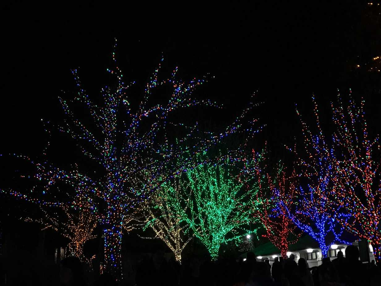Need to see some free Christmas lights in DC? Your first should be to the ZooLights At The National Zoo. It was a fantastic experience and I'm going to highly recommend it! Here are 3 reasons to see the free Christmas lights in DC by visiting?ZooLights At The National Zoo.?