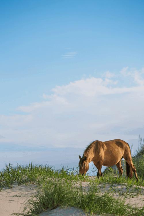 horse on a beach at Chincoteague and Assateague Island Virginia Day Trips