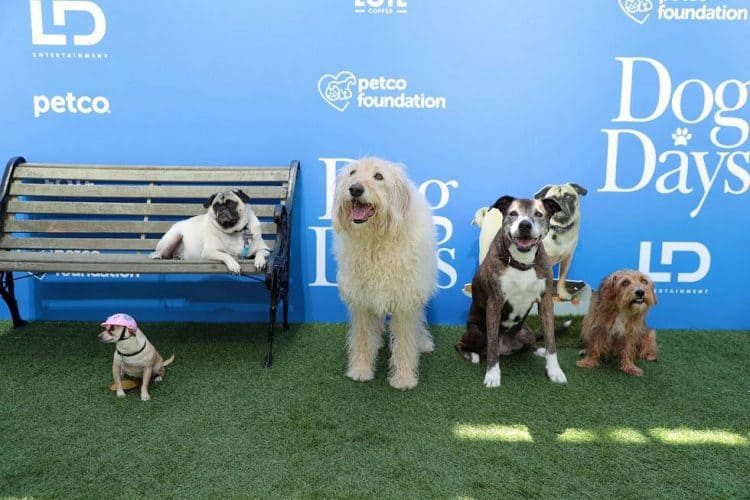 "Gertrude, Mabel, Charlie, Brandy, Sam at the World Premiere of LD Entertainment?s, ""Dog Days"""