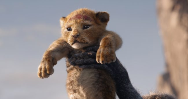 Simba Lion King Live ACtion