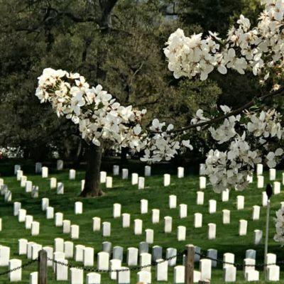 Memorial Day vs Veterans Day Patriotic PSA