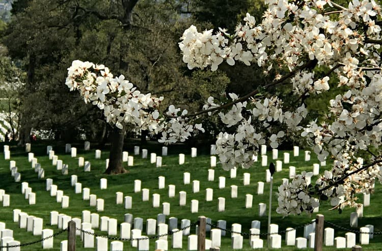 Arlington National Cemetery for memorial day vs veterans day