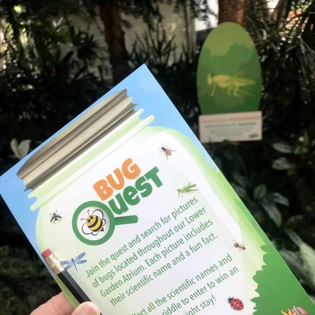 bug quest at gaylord national summerfest