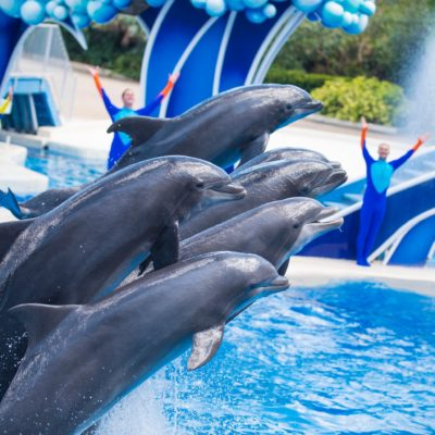 Swim Over to Register For Sea World's Rescue Run