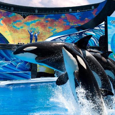 Sea World Orlando Opening
