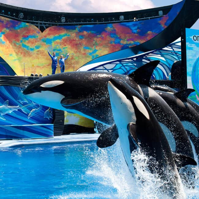 Sea World Orlando opening dates and plans Orcas
