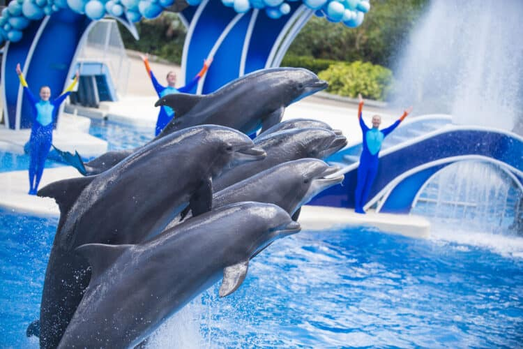 dolphin days sea world
